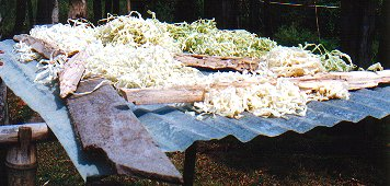 Basket fibers drying in the sun